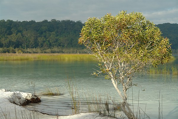 Lake Birrabeen, south of Central Station rainforest campground on Fraser Island.
