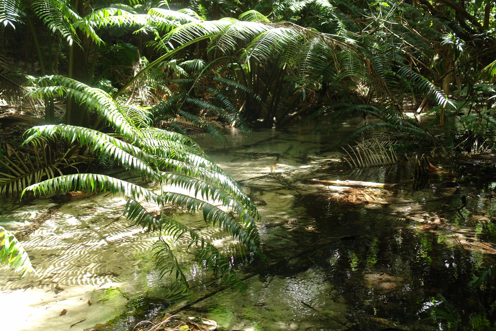 Wanggoolba Creek at Central Station gives you an idea of how pristine this environment actually is.